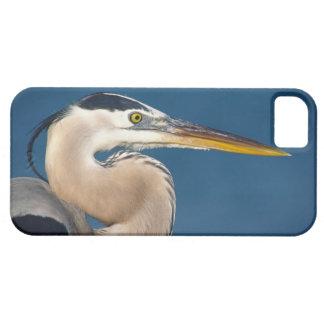 Great Blue Heron (Ardea herodias). USA, Florida, iPhone 5 Covers