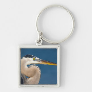 Great Blue Heron (Ardea herodias). USA, Florida, Silver-Colored Square Key Ring