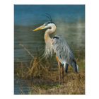 Great Blue Heron at the Pond Print