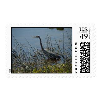Great Blue Heron at Viera Wetlands Postage