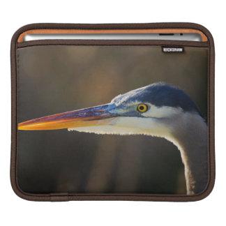 Great Blue Heron, close up portrait iPad Sleeve