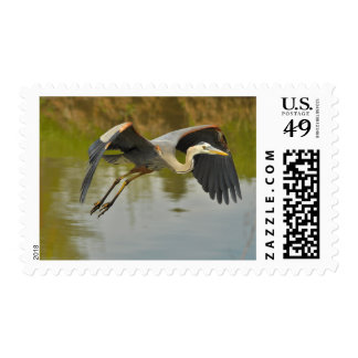 Great Blue Heron First Class Postage