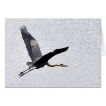 Great Blue Heron Flying Greeting Card