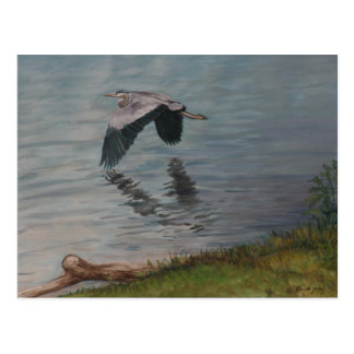 Great Blue Heron in Flight Bird Art Postcard