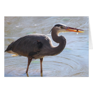 Great Blue Heron Notecard - Blank Inside