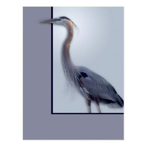 Great Blue Heron Postcards