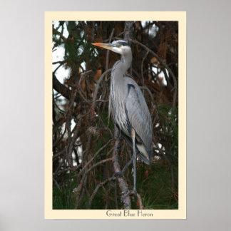Great Blue Heron Poster Print