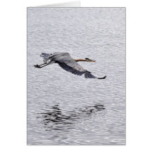Great Blue Heron Soaring Above the Water Greeting Card