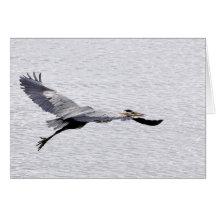Great Blue Heron Soaring Greeting Card