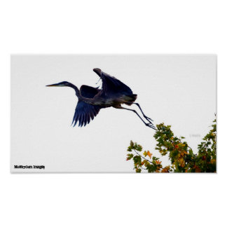 Great Blue Heron - The Launch Posters