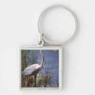 Great Blue Heron water bird found throughout Key Chain
