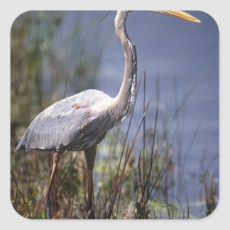 Great Blue Heron water bird found throughout Square Sticker