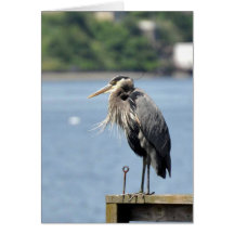 Great Blue Heron with the Wind at its Back