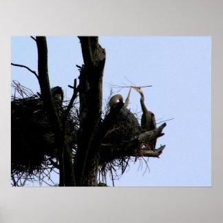 great blue herons at cathedral pines print