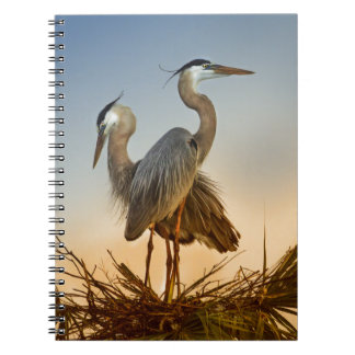 Great Blue Herons at Sunrise Notebooks
