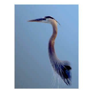 Great Blue Poster