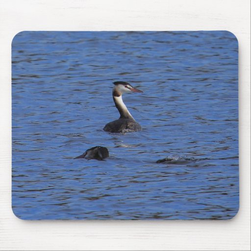 Great Crested Grebe Mousepad