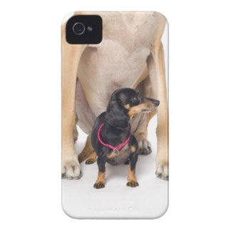 Great Dane and Dachshund portrait iPhone 4 Case-Mate Case