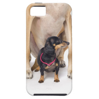 Great Dane and Dachshund portrait Tough iPhone 5 Case