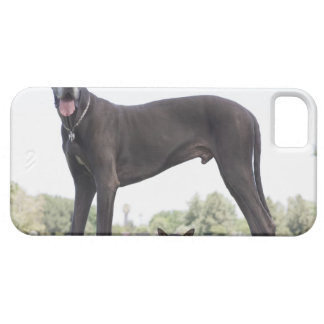 Great dane and small mixed-breed dog case for the iPhone 5