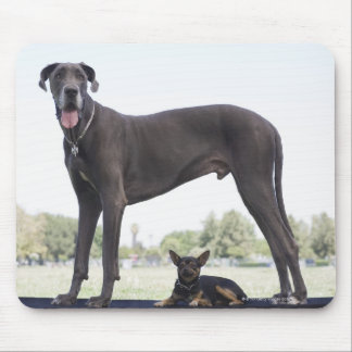 Great dane and small mixed-breed dog mouse pad