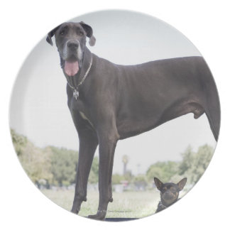 Great dane and small mixed-breed dog plate