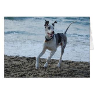Great Dane at beach Card