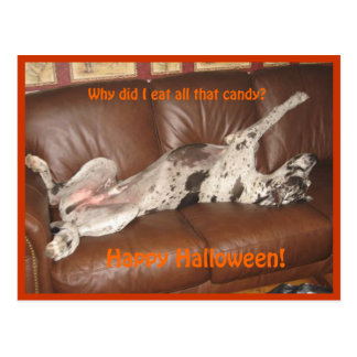 Great Dane Ate Too Much Halloween Candy Postcard