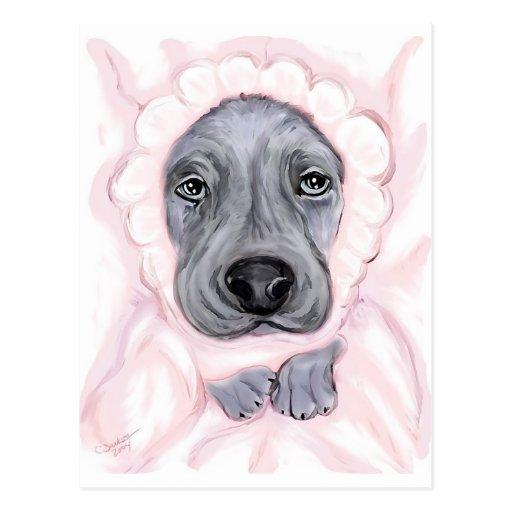 Great Dane Baby Blue Girl Postcard