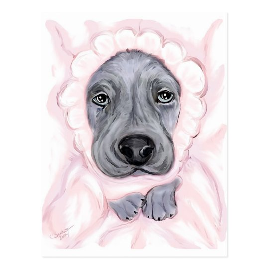 Great Dane Baby Blue Girl Postcard