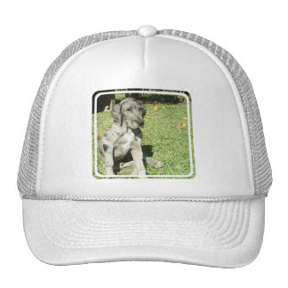 Great Dane Baseball Hat