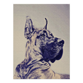 great dane- blue sketch poster