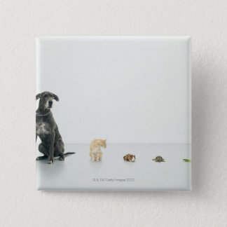 Great Dane, cat, guinea pig, tortoise and slug 15 Cm Square Badge