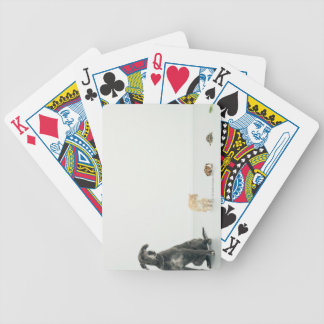 Great Dane, cat, guinea pig, tortoise and slug Bicycle Playing Cards