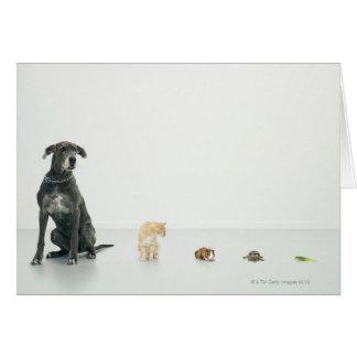 Great Dane, cat, guinea pig, tortoise and slug Card