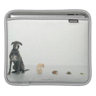 Great Dane, cat, guinea pig, tortoise and slug iPad Sleeve