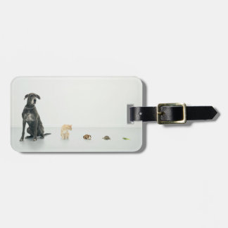 Great Dane, cat, guinea pig, tortoise and slug Luggage Tag