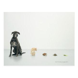 Great Dane, cat, guinea pig, tortoise and slug Postcard