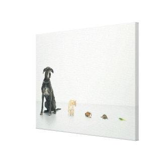 Great Dane, cat, guinea pig, tortoise and slug Stretched Canvas Print