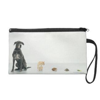 Great Dane, cat, guinea pig, tortoise and slug Wristlet