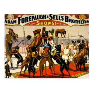 Great Dane Circus Show Postcard