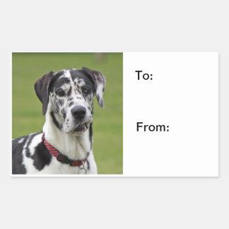 Great Dane dog beautiful photo dog stickers