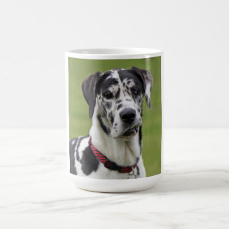 Great Dane dog beautiful photo portrait, gift Coffee Mug