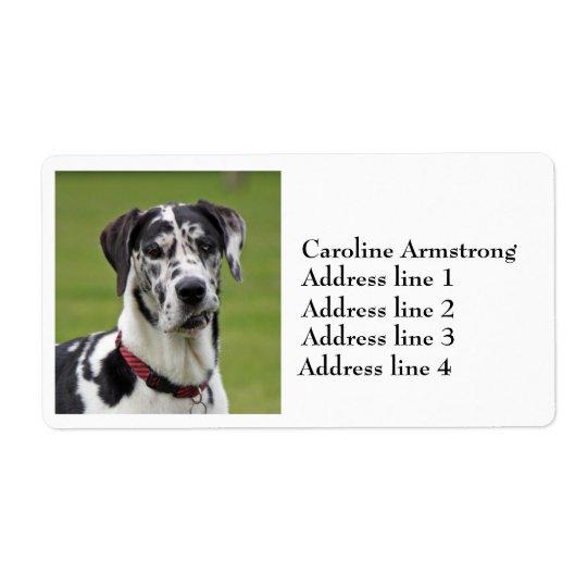 Great Dane dog harlequin custom address labels