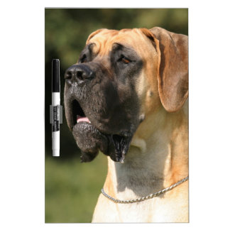 Great Dane - fawn Dry-Erase Boards