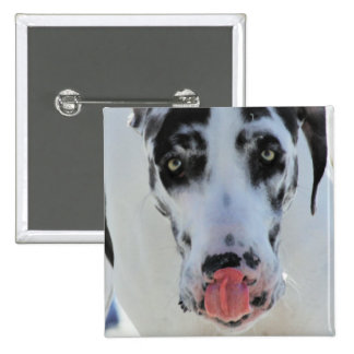 Great Dane - Harlequin - My Tongue Touches My Nose 15 Cm Square Badge