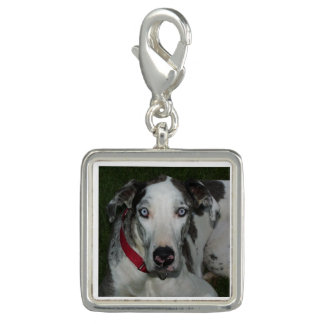 Great Dane Merlequin Charm