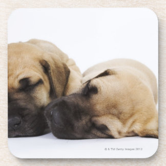 Great Dane puppies sleeping side by side in Coaster