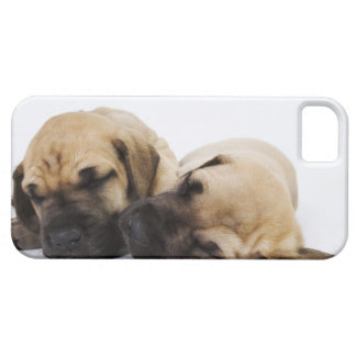 Great Dane puppies sleeping side by side in iPhone 5 Cover