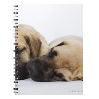 Great Dane puppies sleeping side by side in Notebook